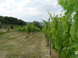 Rosato Doc Irpinia our vineyards