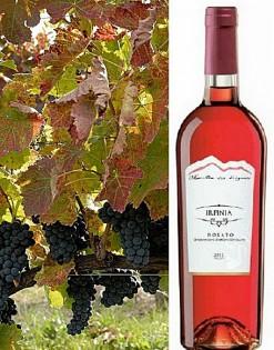 Rosato doc Irpinia rosé