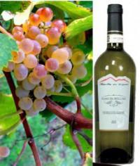 Fiano di Avellino DOCG White wine